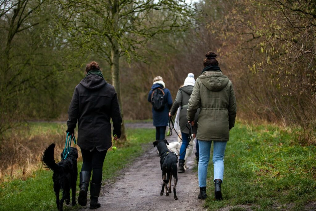 Wandelingen_Honden