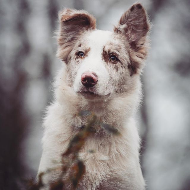 Hike hond