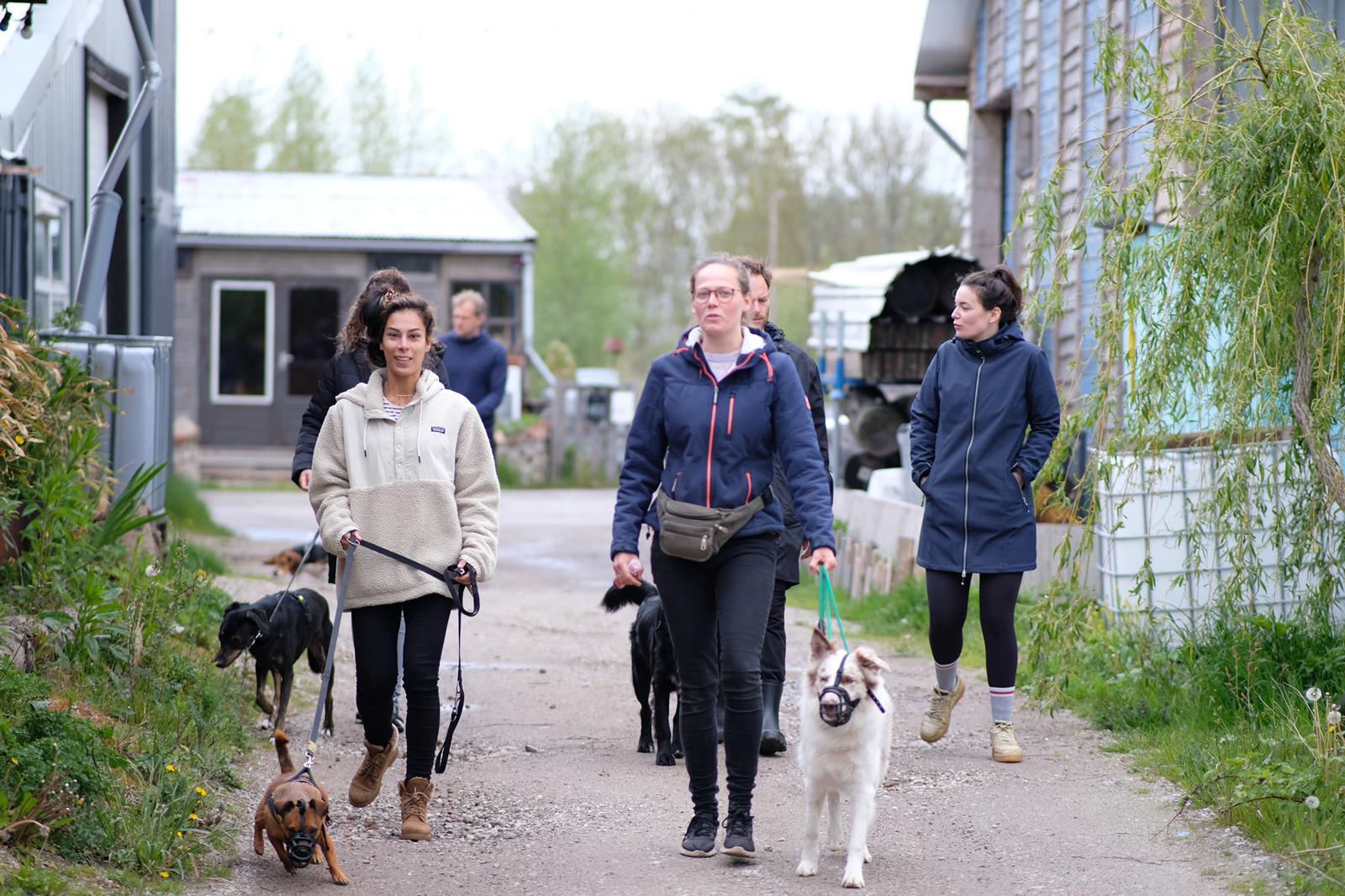 Hondenwandeling_Groningen